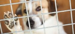 Animais de estimação: abandono e maus-tratos dão multa ou prisão