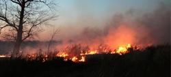 Incêndios florestais: prevenir e agir