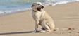 Cães podem ir à praia?