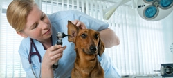 Como reclamar de centros de atendimento médico veterinário