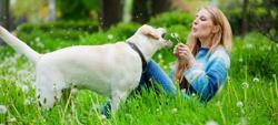 Febre da carraça: como prevenir